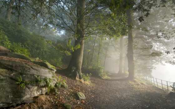лес, природа, дорога, свет, звуки, природы, пользователя, туман, яndex, коллекция,