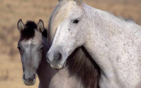 caballos, cumpleaños, caballo, feliz, los, del, hijo,
