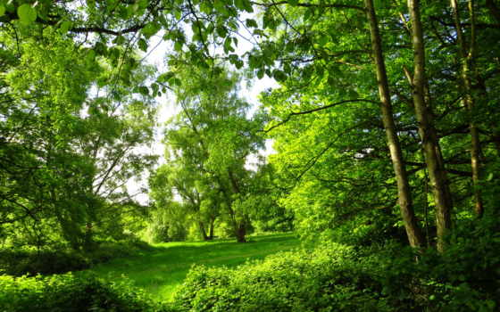 флот, природа, summer, деревя, london, лес,