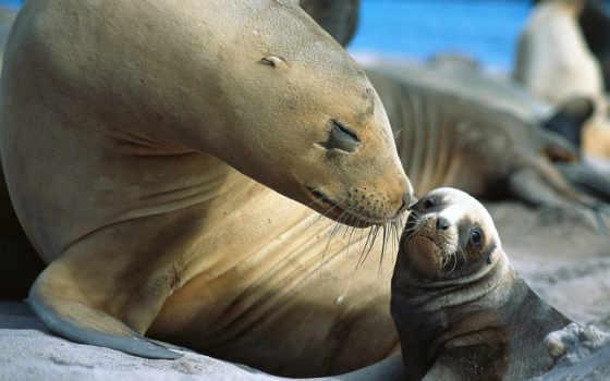 морские, zhivotnye, животных