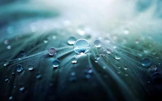 макро, капли, water Фон № 121480 разрешение 1920x1200