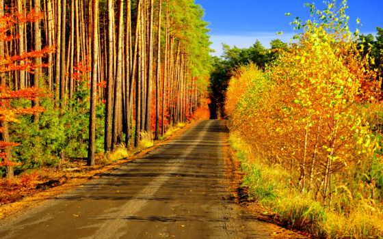 пейзажи -, страница, качественные, природа, trees, осень, картинка, лес, рабчего, картинок,