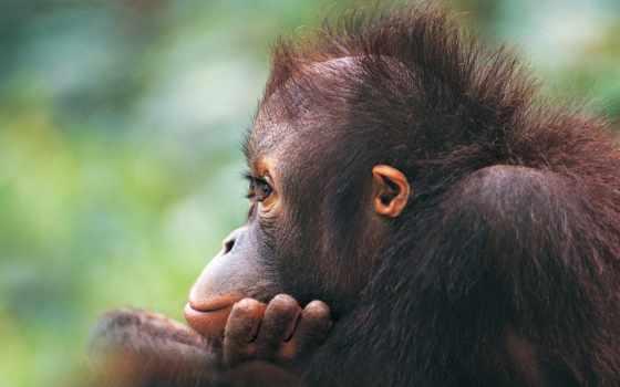 обезьяна, обезьяны, шерсть