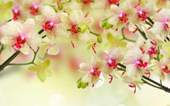 world, красоты, цветы