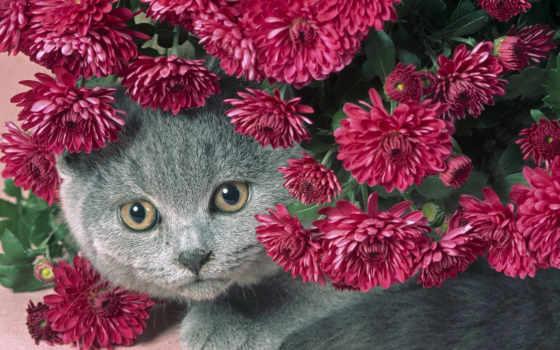 кот, цветы, серый