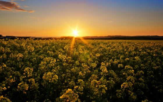 цветы, пейзажи -, favourite