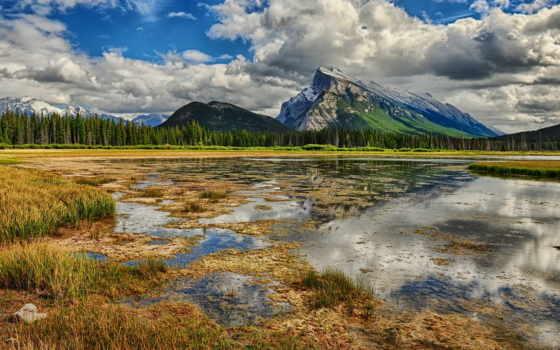 swamp, лес, пейзажи -