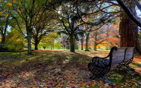 park, осень, zealand, новая, природа, new, trees, blenheim, pollard,