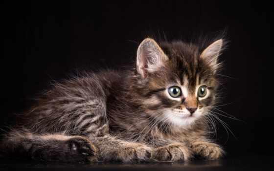 пушистый, кот, анимации, обложки, анимированные, об, анимация, love, улыбнись, котенок, ангорский,