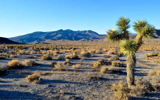 навин, дерево, national, park, пейзажи -, пустыня, небо, картинка, смерть,