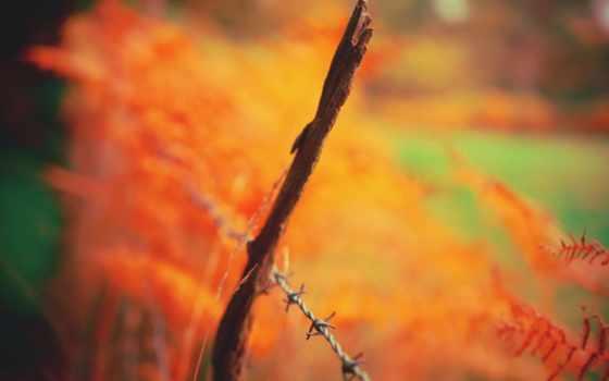 home, leaf,