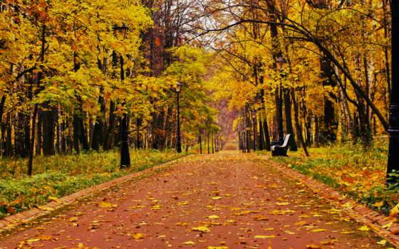 park, магазин, скамейка, настроение, loneliness, лес, природа, осень, trees,