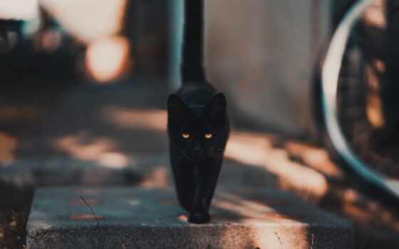 кот, черная, улица, лекарство, animal, они, фото, vietnam, feline