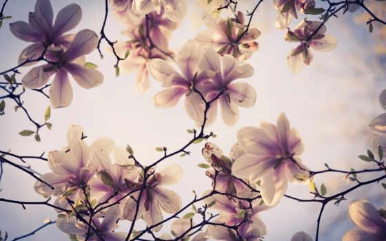 цветы, дерево, flowers