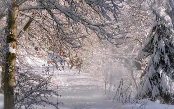 winter, природа, за, desktop, тапети, лес, снег,