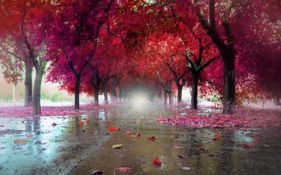 листва, город, osen, афоризмы, осень,