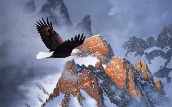 winter, живопись, горы, derk, hansen, орлан, огонь, снег, гора, полет,