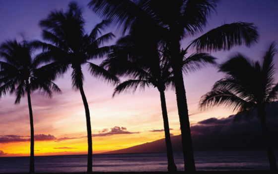 закат, море, рай, palm, дерево, landscape, природа, красавица,