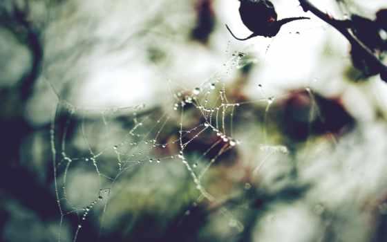 капли, макро, web, лес, блики, свет, осень, природа, растения, ветки,
