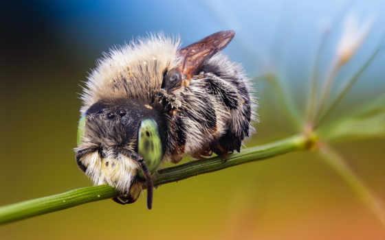animals, desktop, птицы, красивые, zhivotnye, пчелы,