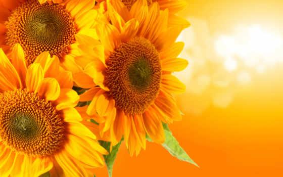 hoa, hành, hương, dụng, mắt, trải, nın, màu,