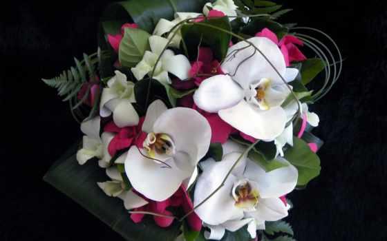 цветы, white, орхидея, розовый, лепесток, decoration, букет
