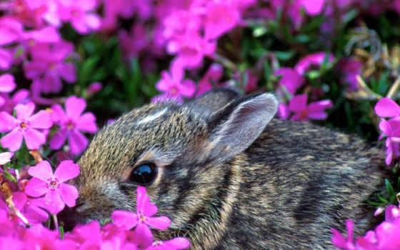 para, rabbit