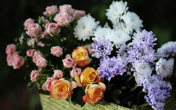 розы, хризантемы, троянди