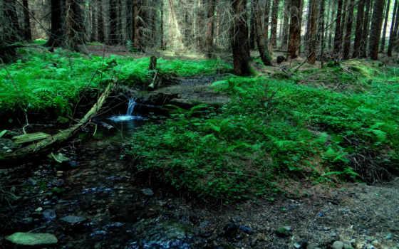 природы, звуки, музыка, природа, птиц, пение, лес, living, часов, sounds, музыку,