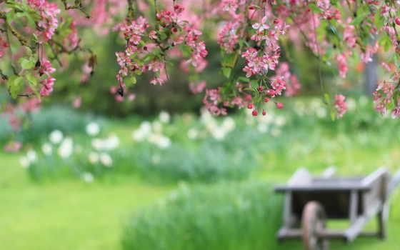 природа, cvety, cherry, лепестки, широкоформатные, размытие, branch, повозка, розовые,