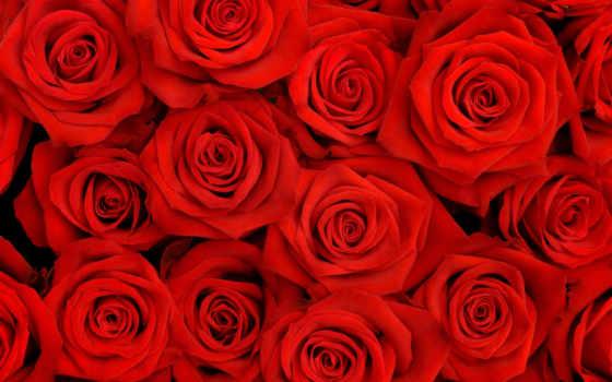 красивые, cvety, розы, заставки, бутоны, роза, букет,