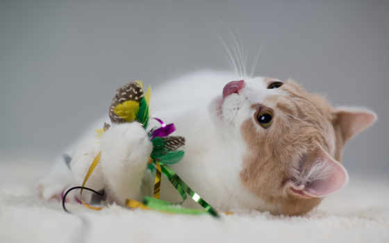 кот, ecran, android, anime, игрушки, mas, fond, кошки, загружено, милые,