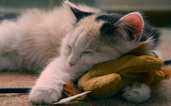 кот, cute, sleeping, postcard, день, mania, name