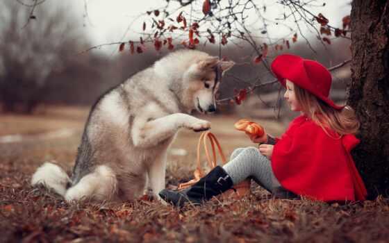 собака, devochka, животное, pazlyi, ребенок, osen, priroda, дерево, sidet, корзина, devushka