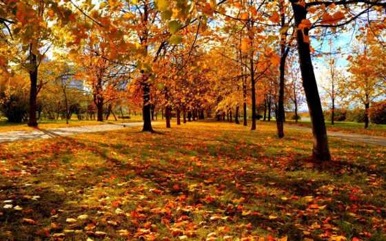 москва, осень Фон № 27787 разрешение 2560x1600