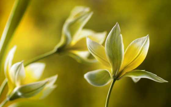 цветы, макро, желтые