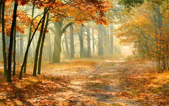 landscape, природа, мм