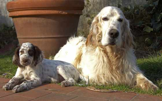 zhivotnye, собаки, щенок