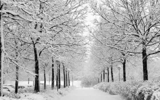 снег, winter, деревя
