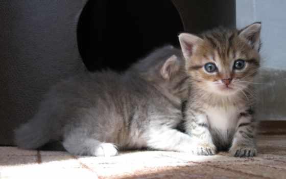котята, малыши, котенок