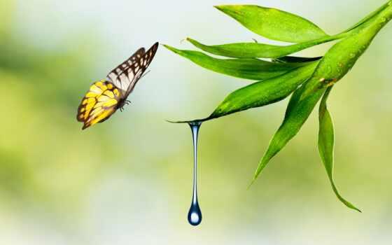 бабочка, drop, waters