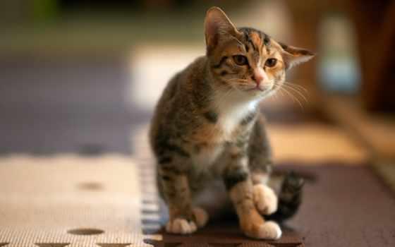 mão, con, hành, chỉ, yêu, кот, взгляд, house, vũ, bạn,