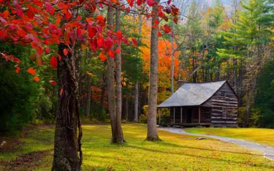 осень, осенние, поздняя, пейзажи -, заставки, mercedes, trees,