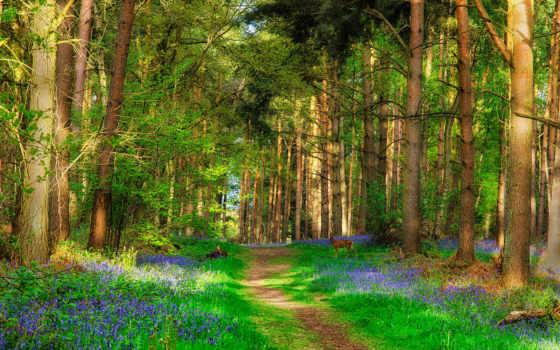лес, природа, пользователя, коллекция, дорога, трава, cvety, trees, лань,