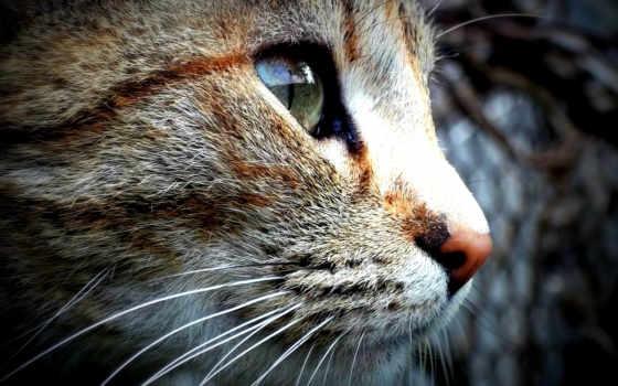 zhivotnye, кот, страница