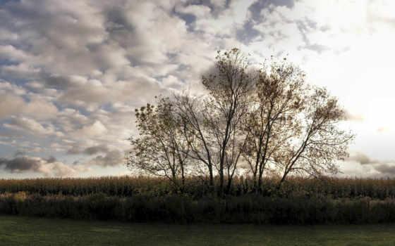 небо, трава