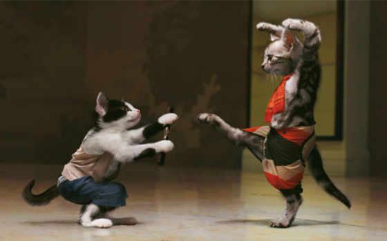 desktop, абстракция, пара, животные, код, одежде, коты, cat, котята, they, sfondi, фу, костюм, кунг, юмор, gratis, боевое, котов, στην, дрессировка, игривые,