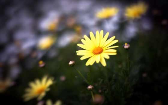 Цветы 37360