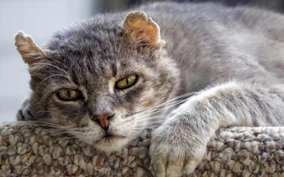 кошка, домашняя, кошки