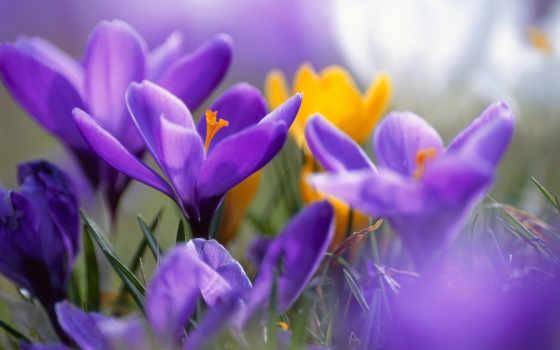 цветы, summer, мар